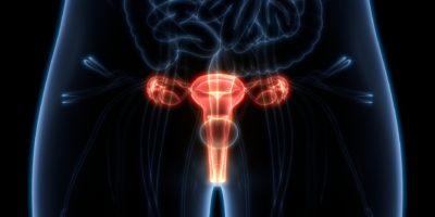 3D-Darstellung der Anatomie des weiblichen Fortpflanzungssystems