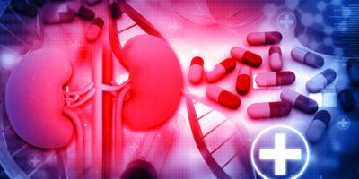 3D-Rendering der menschlichen Niere mit Medikamenten