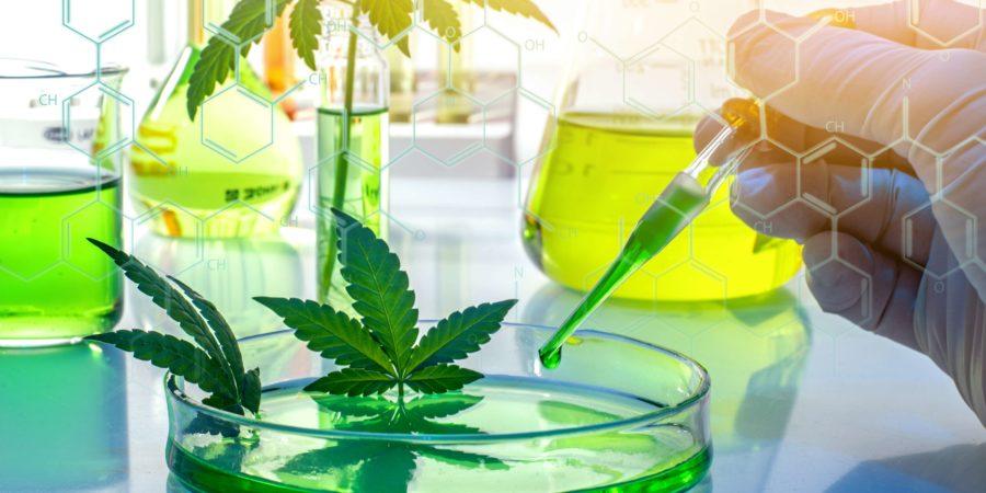 Wissenschaftliche Forschung von medizinischem Cannabis zur Verwendung in der Medizin, Biotechnologiekonzept
