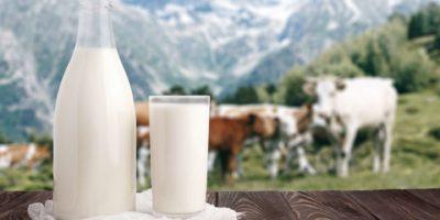 Milchflasche und Glas Milch an der hölzernen Tischplatte auf Hintergrund der Bergweide und der Kuhherde. Ökologische Milchproduktion