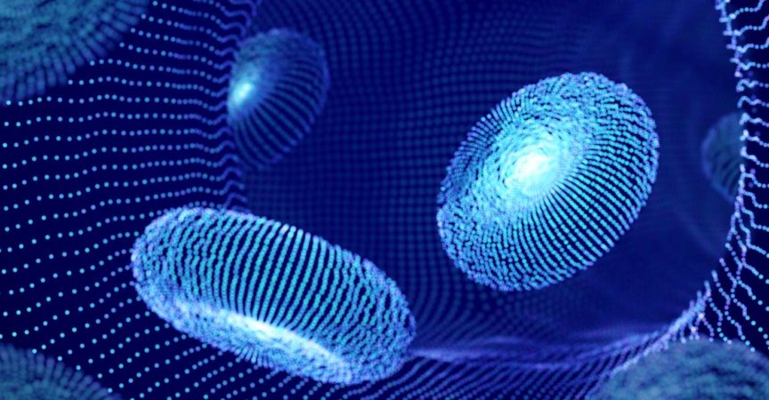 Digitale rote Blutkörperchen (Erythrozyten)