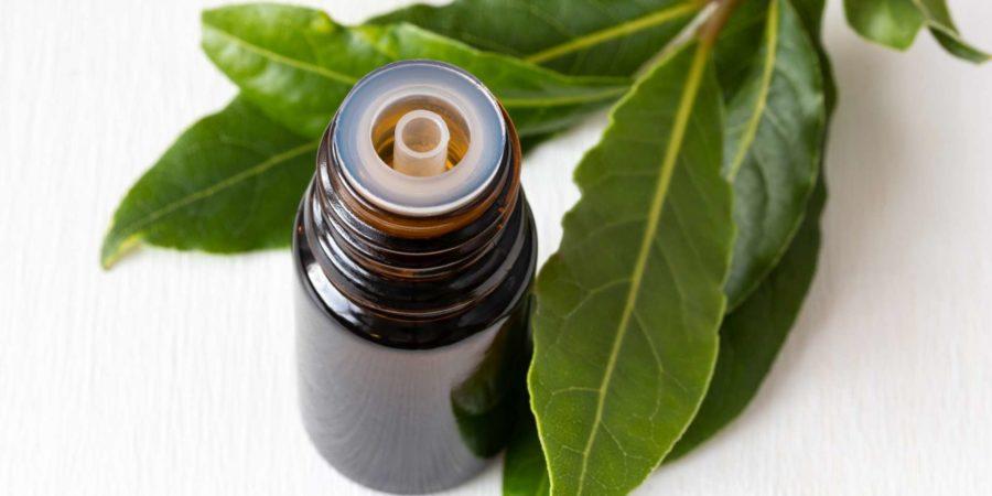 Eine Flasche ätherisches Öl mit frischen Lorbeerblättern auf weißem Hintergrund