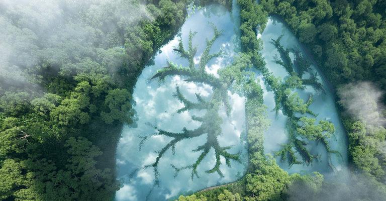 """Regenwald als """"grüne Lunge"""""""