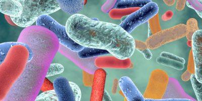 Nützliches gesundes Darmbakterium.