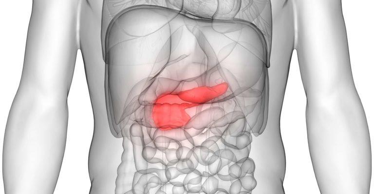 3D-Darstellung der Anatomie des menschlichen Körpers (Bauchspeicheldrüse)