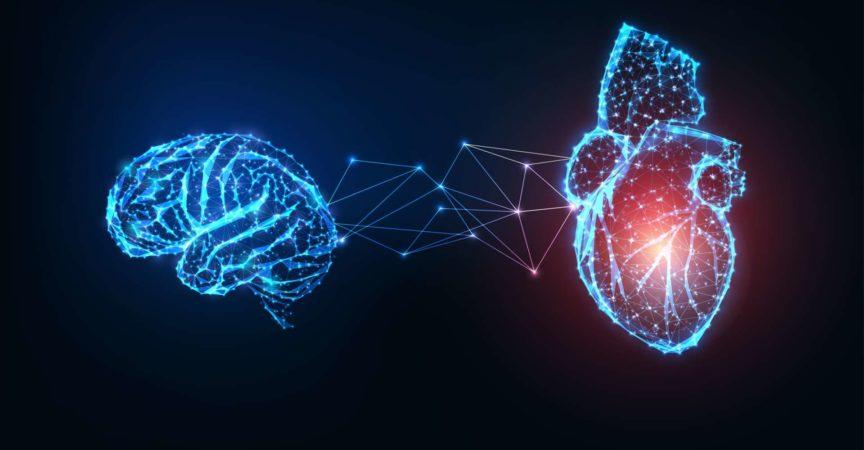 Futuristisch leuchtende niedrige polygonale verbundene menschliche Organe Gehirn und Herz auf dunkelblauem Hintergrund.