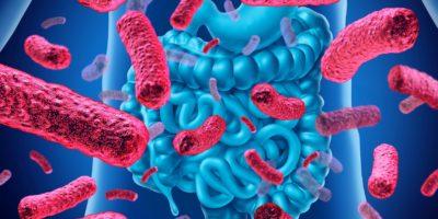 Medizinisches Anatomiekonzept von Darmbakterien und Darmflora oder Darmbakterien als 3D-Illustration.
