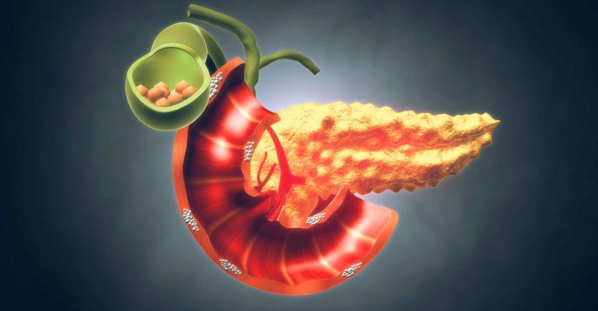 Menschliche Bauchspeicheldrüse