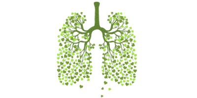 Menschliche Lungen aus Blättern isoliert auf weißem Hintergrund