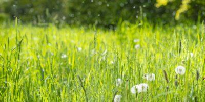 Luft ist mit Pollen gefüllt.