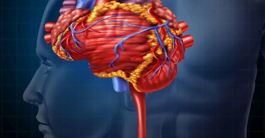 Herz Gehirn