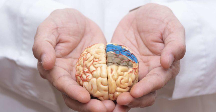 Arzt mit dem Finger, um ein Gehirnmodell mit beiden Händen zu halten, um das Gehirn zu pflegen