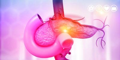 Anatomie der Bauchspeicheldrüse. 3D-Darstellung