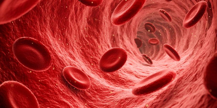 Endoskopische Ansicht von fließenden roten Blutkörperchen in einer Vene, Illustration rendern