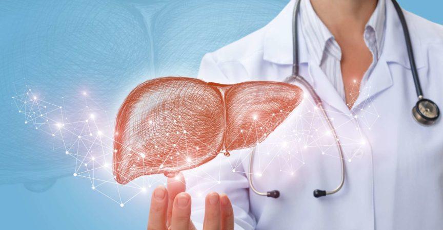 Arzt zeigt Leber in der Hand auf blauem Hintergrund.