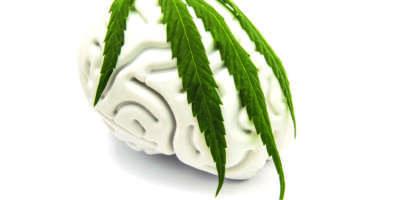 Die Figur des menschlichen Gehirns, bedeckt mit einem grünen Blatt auf medizinischem Cannabis. Die Idee zu den Merkmalen der Marihuanasucht oder der Verwendung von Marihuana in der Neurologie oder Neurowissenschaft