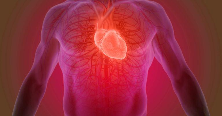 3D-Rendering der menschlichen Herzanatomie