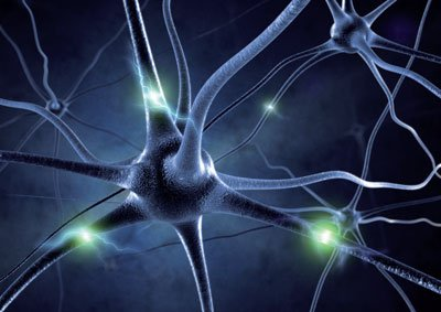 Autoantikörper greifen die Myelinscheide und selten direkt die Axone an.