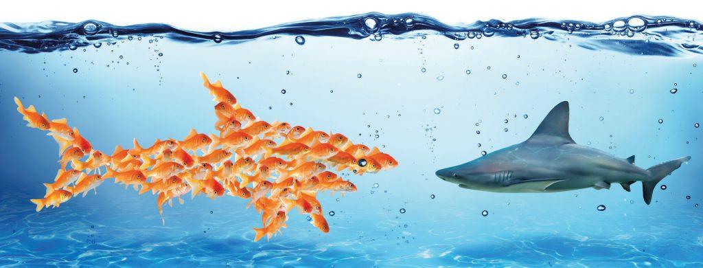Kooperationen ermöglichen es auch kleinen Fischen, großen Fischen auf Augenhöhe zu begegnen.