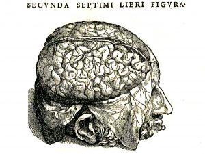 Abb.: Wikimedia - PublicDomain