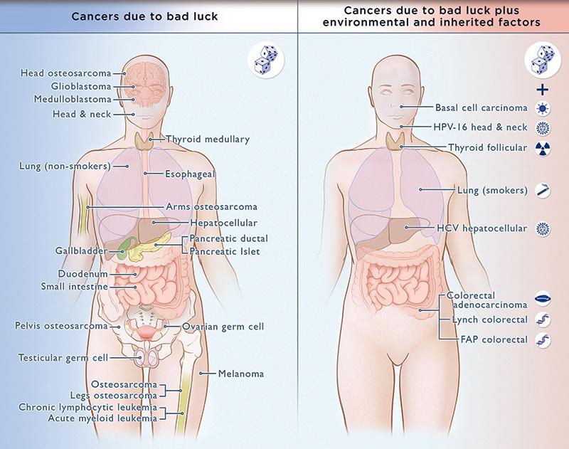 Zwei Drittel aller Krebsfälle bei Erwachsenen gehen auf das Konto von zufälligen Mutationen.
