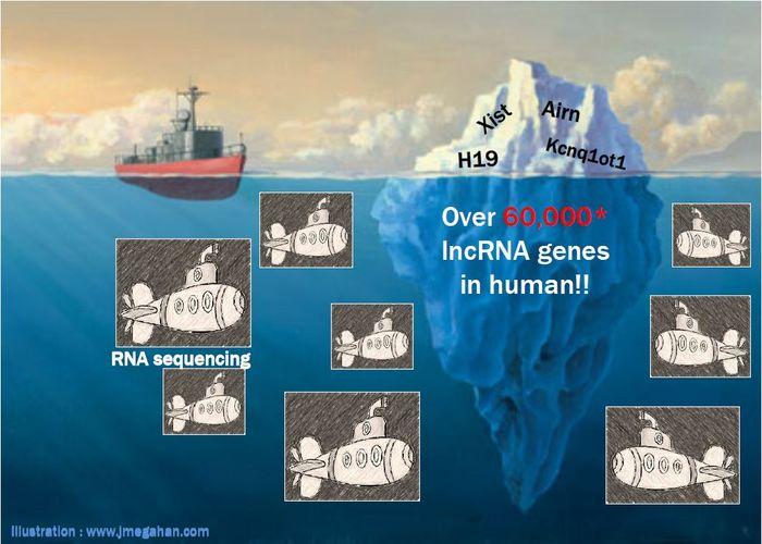 Die Mengen an langen, nicht-kodierenden RNA-Molekülen variieren viel stärker zwischen einzelnen Probanden als deren RNAs mit Proteinbauplänen. Damit tragen sie auch stärker zur biologischen Individualität bei.