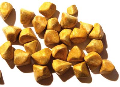 Gallensteine können stattliche Größen erreichen (hier mit rund 1cm) und je nach Zusammensetzung von unterschiedlicher Farbe sein