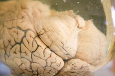 Eslicarbazepinacetat kann im Mausmodell und in humanen Gewebeproben Medikamentenresistenzen überwinden und möglicherweise den Verlauf von Epilepsien günstig beeinflussen.