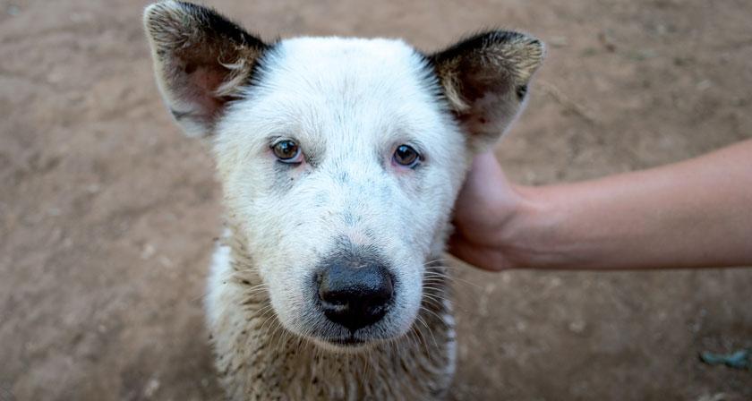 Bei Tierfreunden sollte die Indikation zur präexpositionellen Tollwutimpfung streng gestellt werden.