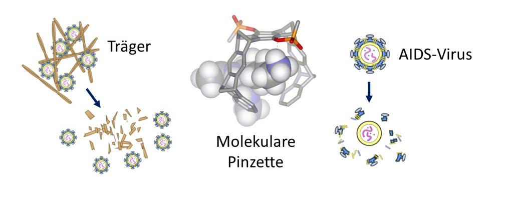 So funktioniert die molekularen Pinzette bei AIDS
