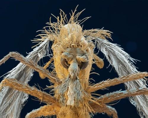 Parasiten, wie die Sandmücke der Gattung Phlebotomus, die auf dieser Elektronenmikroskop-Aufnahme zu sehen ist, sind überall. Wir können Parasiten nicht gänzlich entkommen, aber das Wissen um die biologischen Zusammenhänge ermöglicht heute neben der medizinischen Behandlung in Akutfällen auch die Vermeidung der Infektion. Wie? Indem man etwa die Zwischenwirte oder Überträger bekämpft bzw. den Kontakt mit ihnen und den Krankheitserregern minimiert. Zur Aufklärung der Öffentlichkeit dienen auch die neuen Parasitenvitrinen im NHM Wien. Zu sehen ab 24. Juni 2015 in Saal 22.