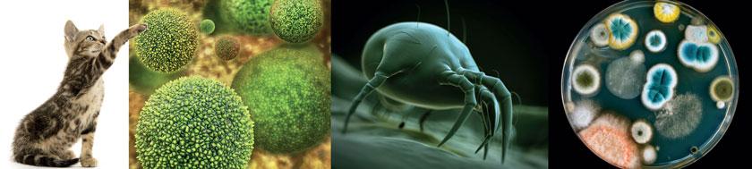 Häufige Allergieauslöser: Tierhaare, Pollen, Hausstaubmilben, Schimmelpilze
